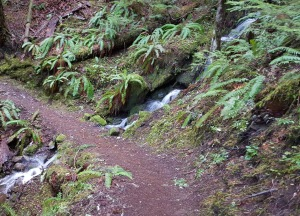 trestle path