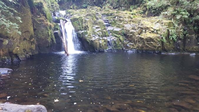 sweet-creek-falls